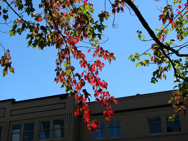 Fall Leaves in August, Astoria, Oregon