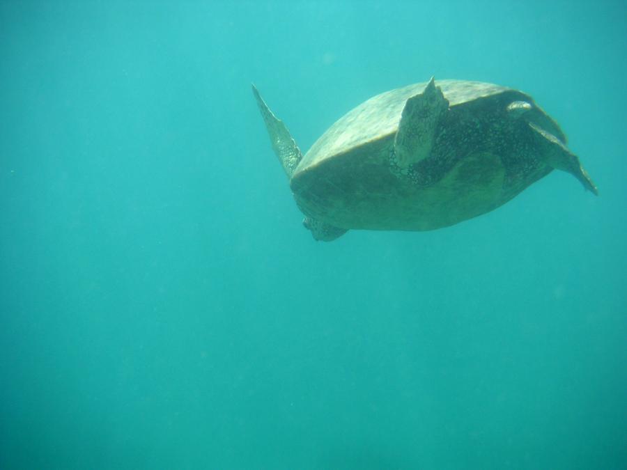 Sea Turtle, Hawaii