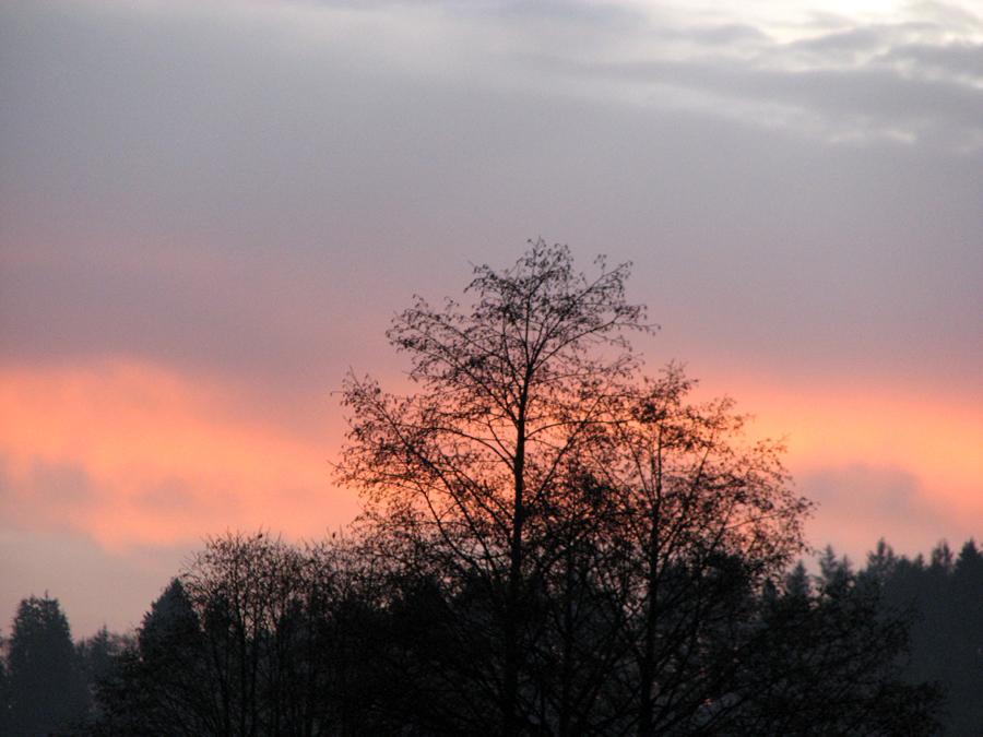 Sunrise and Tree, Astoria