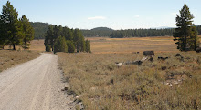 Toward the eastern end of Henness Pass Road (Sierra County)