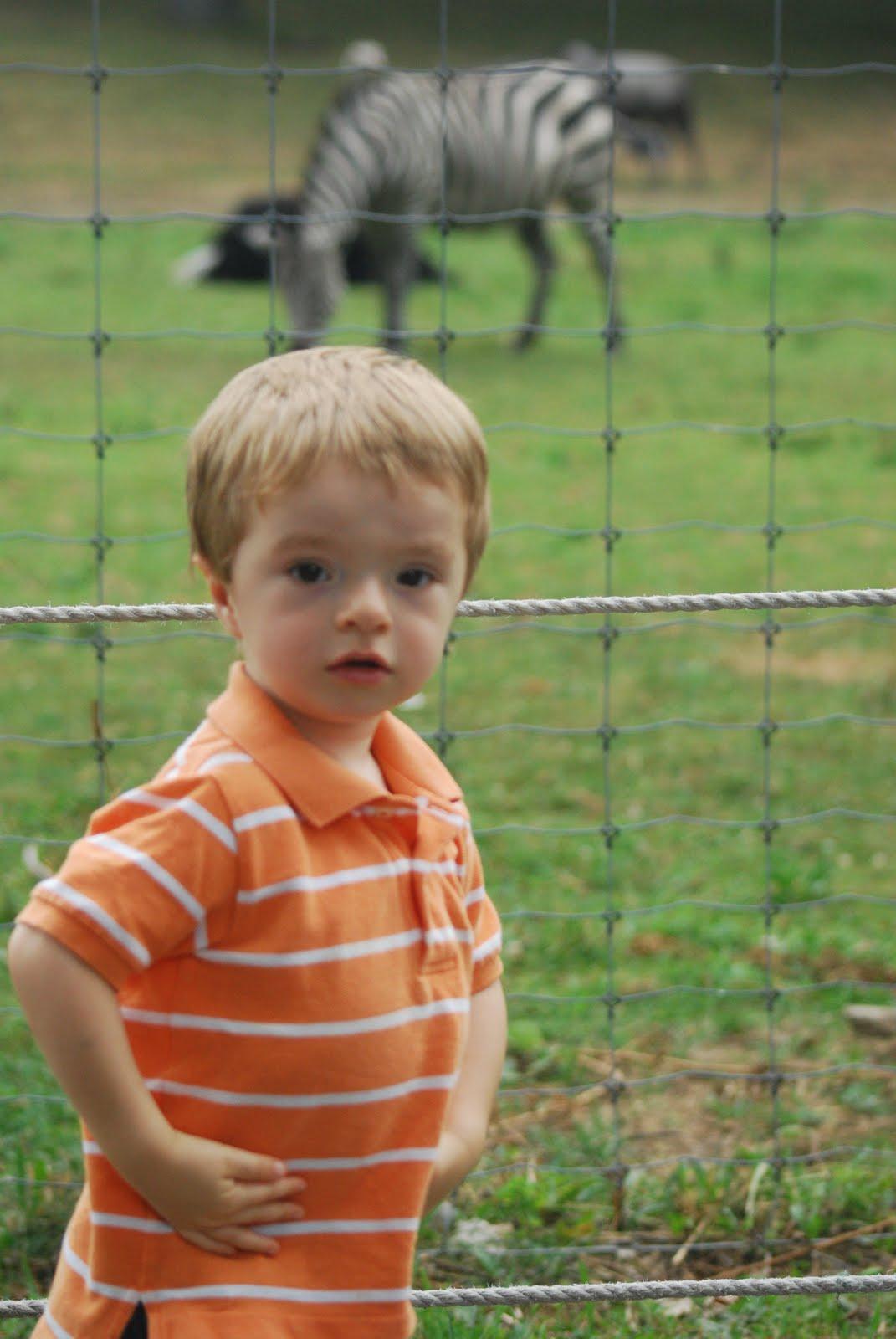 http://1.bp.blogspot.com/_DcE6MUSH06Y/TEoWEZ2b54I/AAAAAAAAIpc/P8yg7lTjRcU/s1600/Franklin+Park+Zoo+7-23-10+(16).JPG