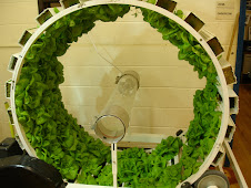 The Bonzai Wheel full of lettuce