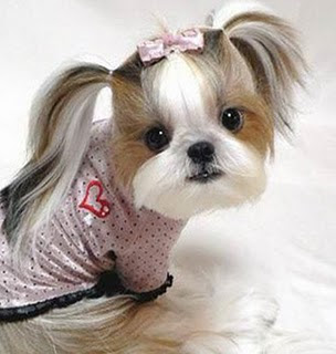 Hair Cuts  Dogs on Pics Obsession  Funny Dog Hair Cuts