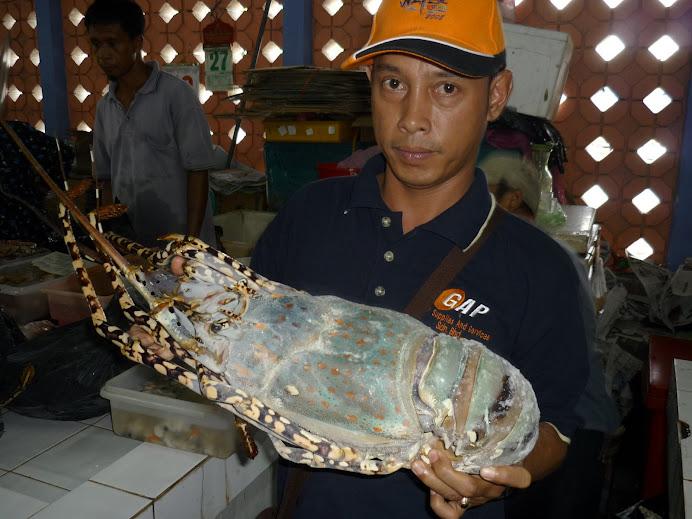the real Labuan Lobster bernilai anggaran RM350-RM450 se-ekor