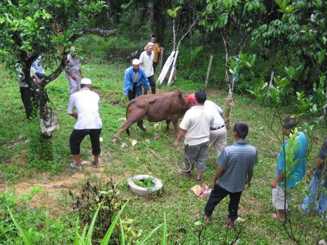 Raya aidiladha 2008 di Lepar Utara Pahang