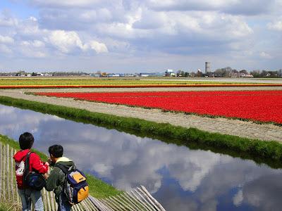 Campuri de flori Olanda