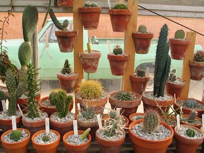 Desert Plants Cactus. african desert plants
