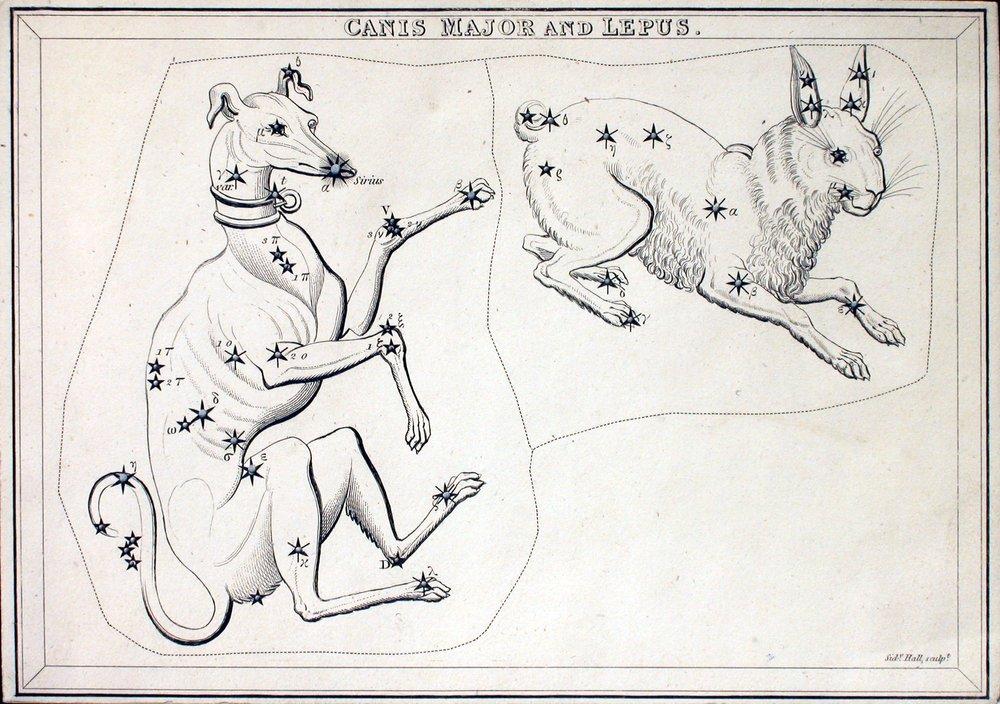 kutya nyúl