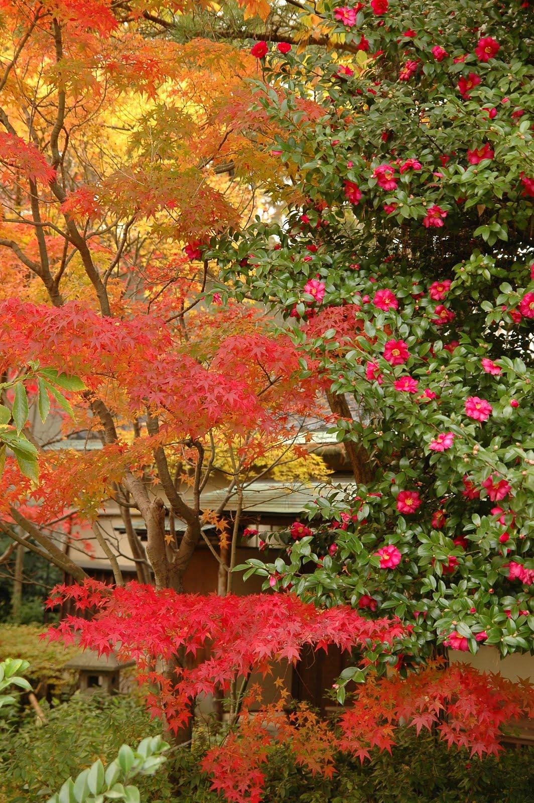 seshiru: Jardins d'automne