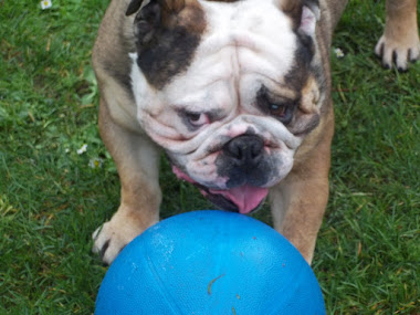 Buddy a dog & his ball.