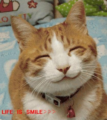 Funny animal picture:smilling cat 搞笑动物图片:微笑的猫