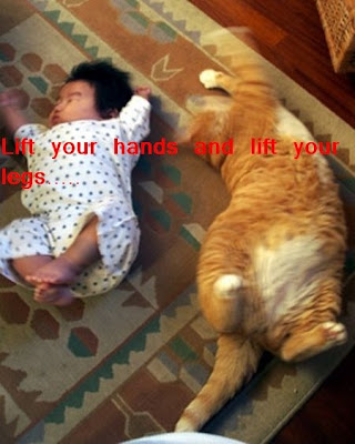 Funny animal picture: Fat cat 搞笑人类贴图:肥猫