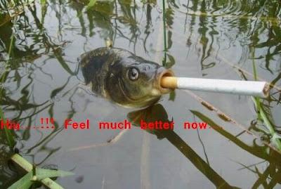 Funny animal picture: Smoking fish 搞笑动物图片:鱼也吸烟