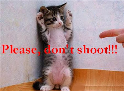 Funny animals: Please don't shoot! 搞笑动物图片:请勿开枪!