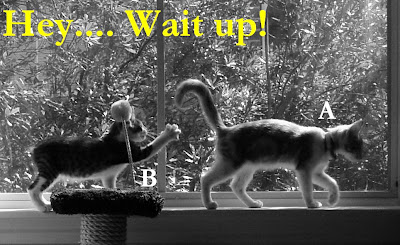 Cat chasing tail funny photos. 猫咪追赶尾巴搞笑图片.