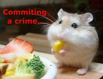 Funny Hamsters: Crime commiting hamster