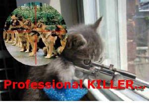 Funny cats: Killer