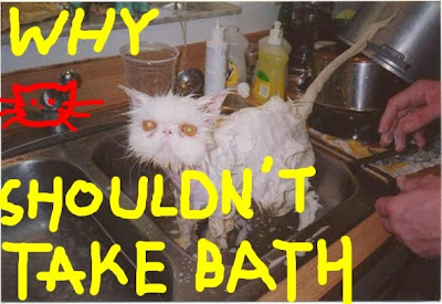 Funny Cats: Cat after bath