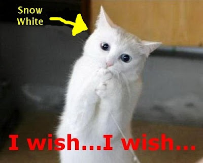 Funny Cats: Make a wish