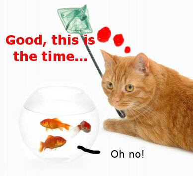 Funny Cats: Fish Catcher
