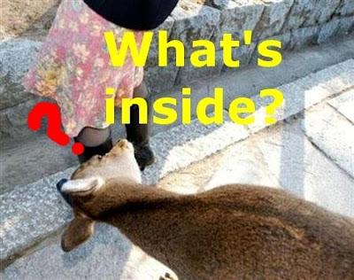 Funny Deers: Peeking deer