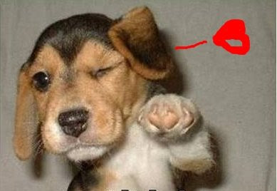 Funny dogs: Greeting dog