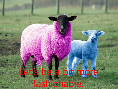Funny Pictures: Trendy sheeps