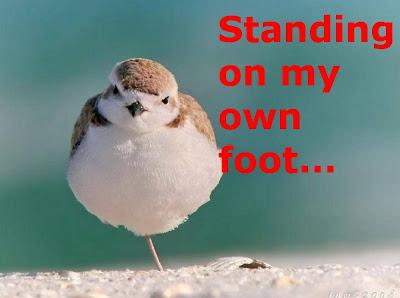 Funny Birds: handicapped bird