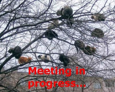 Funny Pictures: Secret meeting