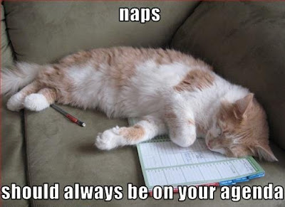 Funny Pictures: Funny sleeping cat