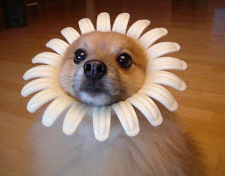 Cute Sunflower Dog - Pictures of Funny Animals