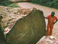Delmas : des groupes demandent d'annuler l'expédition de bois précieux depuis Madagascar