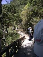 林道盡頭的木橋