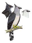 Programa Ave El Aguila Arpia