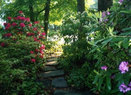 Если хотите устроить сад в тени