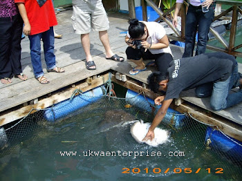 MANGROOVE AKTIVITI - Fish Feeding