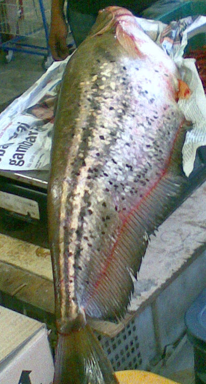 Ikan Tapah Sg Gadak.....