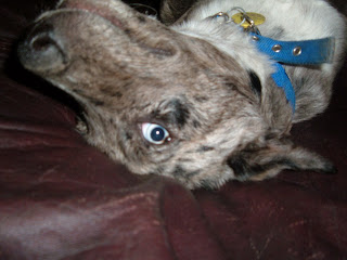 Dog Doorbells For Potty Training
