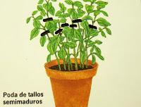 construccion jardines diseno jardines curso jardineria