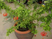 jardineria ecologica escuela jardineria cursos paisajismo