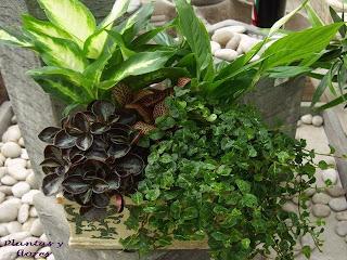 Las plantas de interior miblogmarivi Plantas tropicales interior