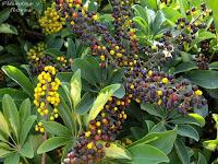 cursos de jardineria gratis revista jardineria revistas de jardineria