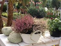 diseno jardineria estudiar jardineria jardinerias
