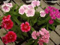 curso de jardineria jardineria paisajismo jardineria y paisajismo