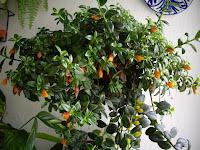 diseno de jardines 3d construccion jardines construccion de jardines
