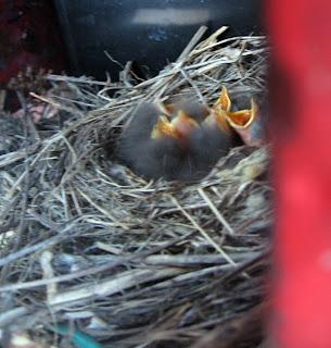 Mamii, ruokaaaaa!!!