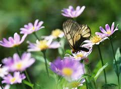 ¿Mariposa?