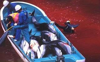 hombres en un bote lleno de delfines muertos, en el agua completamente roja por la sangre
