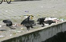 Feira Livre no Guarujá