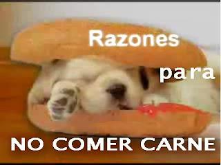 http://1.bp.blogspot.com/_DuLMUd0i7vA/SJu0sEUTrtI/AAAAAAAAAsY/WXOnuNiLnMM/s320/Razones+para+no+comer+carne.jpg
